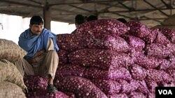 Seorang pekerja dari India duduk di atas karung bawang merah di sebuah pasar di India.Seperti di Indonesia, bawang merupakan bahan penting untuk hampir semua masakan.