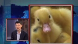 VOA卫视(2013年4月18日 第一小时节目)