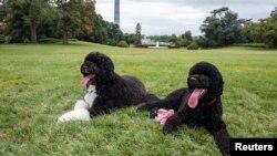 Bo y su hermana Sunny reposan en los jardines de la Casa Blanca.