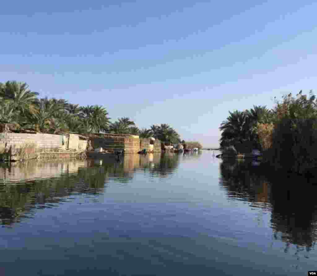 خوزستان- تالاب شادگان از تالابهای بزرگ ایران عکس: امید شیوندی (ارسالی شما)
