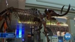 Dinozavr qoldiqlari ko'rgazmasi, Vashington