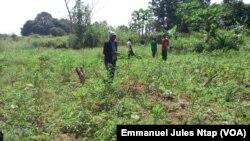 Dans un champs créé par l'ex migrant au village Biyaga, le 3 décembre 2017. (VOA/Emmanuel Jules Ntap)