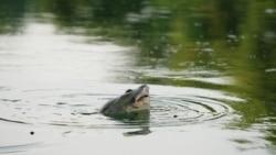 Protecting Freshwater Turtles