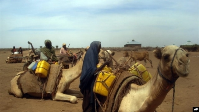 Somali women load water containers on camels near the Wanlaweyn district in the lower Shabelle region, 90 kms south of Mogadishu, 19 Jan 2011