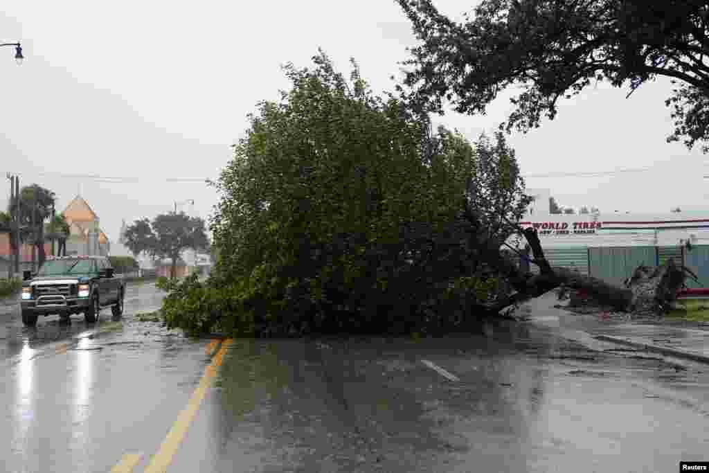 Yon pye bwa ki tonbe e ki bare Biscayne Blvd. pandan siklon Irma rive nan Hollywood, Florid, jounen 10 septanm 2017 la