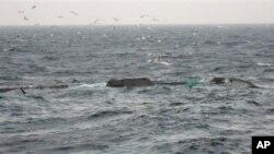 中國漁船與南韓海岸警衛隊船隻相撞後沉沒