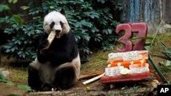 Jia Jia menyantap bambu sementara kue ulang tahunnya yang terbuat dari es dan sayur-sayuran terletak di sampingnya, di kebun binatang Ocean Park di Hong Kong, Selasa (28/7).