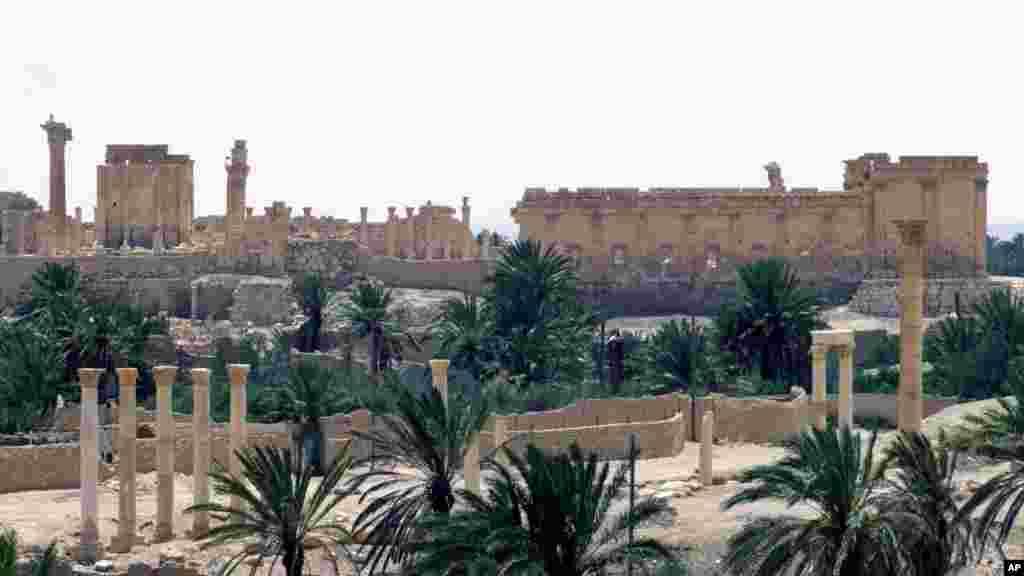 Palmiradan son görüntü
