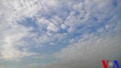 শরতের কাশফুলের সৌরভ শহুরে জীবনকে এনে দেয় স্নিগ্ধতার পরশ