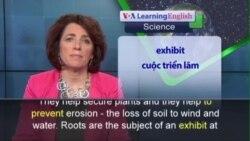 Phát âm chuẩn - Anh ngữ đặc biệt: Secret Life of Roots (VOA)