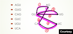 Giải chu trình Euler. (Hình: Vũ Quí Hạo Nhiên)