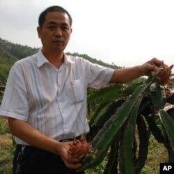 台商陈明河说,台湾红龙果的果树外表很像霸王花。