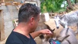 Фарма за магариња во Охрид