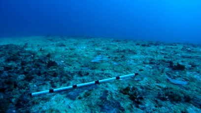 Quiz - Researchers Use Sounds to Call Fish Back to Dead Coral
