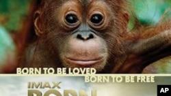 Film 'Born To Be Wild' govori o zaštiti osirotjele mladunčadi slonova i orangutana