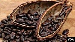 Pantai Gading adalah negara penghasil kakao terbesar di dunia.