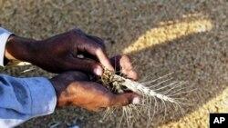 Moçambique importa quase 1 milhão de toneladas de alimentos