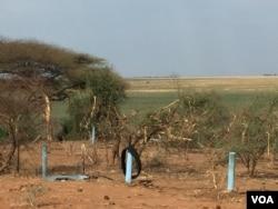 Vegetation is destroyed by elephants along the Botswana-Namibia border. (Mqondisi Dube/VOA)