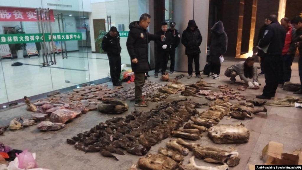 Satuan anti-perburuan satwa liar China menyita sejumlah barang bukti perdagangan ilegal satwa liar di Kota Guangde, Provinsi Anhui, China, 9 Januari 2020. (Foto: AP)