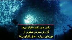 بخش های نادیده اقیانوسها؛ گزارش ملودی صفوی از موزهای درباره اعماق اقیانوسها