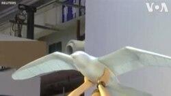 Չինաստանում ռոբոտ թռչուն են կառուցել