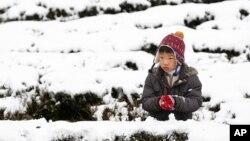Bé trai nghịch tuyết trên đồi chè ở vùng núi Pinglin của Tân Bắc, Đài Loan, ngày 25/1/2016.