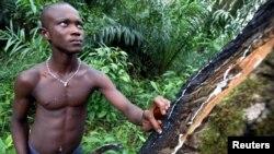 Un jeune Libérien dans une plantation d'hévéas non loin de Monrovia, le 27 août 2005.