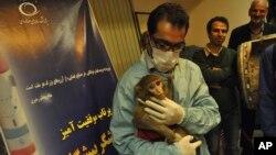 عکس تزئینی: تصویری از اولین میمونی که گفته می شود ایران به فضا فرستاده است.