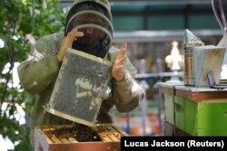 Peternak lebah Andrew Cote membuang kawanan besar lebah yang dia pindahkan dari sebuah gedung di Times Square ke sarang baru di Bryant Park di New York, AS, 27 Juni 2017. (Foto: REUTERS/Lucas Jackson)