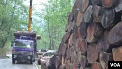 缅甸2014年禁止原木出口的政策下达后,在云南边境口岸,从缅甸运进的原木并未完全绝迹。(美国之音朱诺拍摄,2014年5月7日)