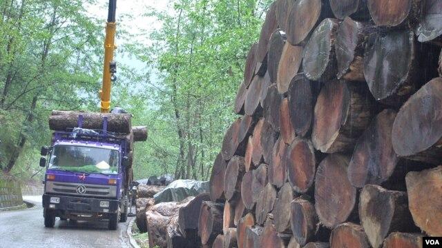中国红木家具,东南亚森林的血腥浩劫