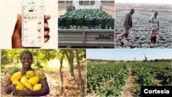 Startup Field Right já começou a contactar produtores angolanos