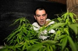 Marijuana grower and activist Juan Vaz checks marijuana plants in Montevideo, Uruguay, Aug. 9, 2012.