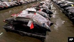 Atum é a espécie privilegiada