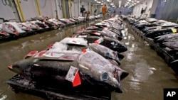 Japoneses levam grande parte do atum em Benguela