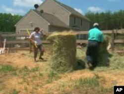The Hossains do most of the farm work themselves.