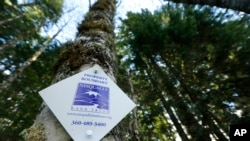 A project in Washington state is ensuring that forest land remains intact around Mount Rainier National Park, so the trees can continue to grow and store carbon dioxide emissions. One of the forest land boundary markers on a tree, Nov. 23, 2015, near Ashf