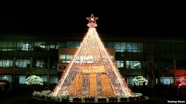 전북 무주군 군청사 앞 대형 크리스마스트리. (자료사진)