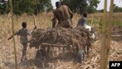 Nigeriya fermerlari