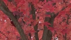 US Autumn Leaves Display Amazing Patterns