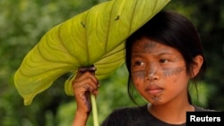 A Sarayaku Indian girl shades herself with a large leaf as she watches a celebration in the village of Sarayaku, Ecuador, Sunday, Aug. 12, 2012.