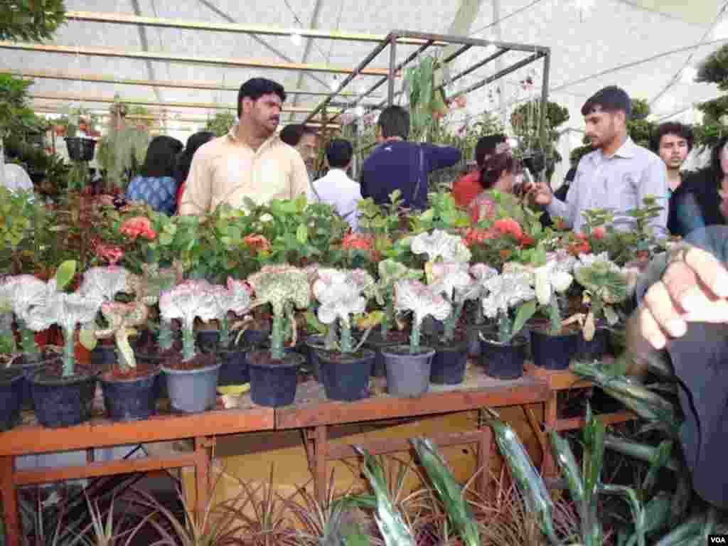 کراچی میں سجی پھولوں کی نمائش