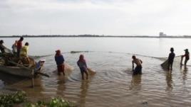 WWF nói các chủng loài tiêu biểu như loài cá ba sa khổng lồ ở sông Mekong có thể bị tuyệt chủng.