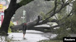 A man stands in front of an uprooted oak tree.