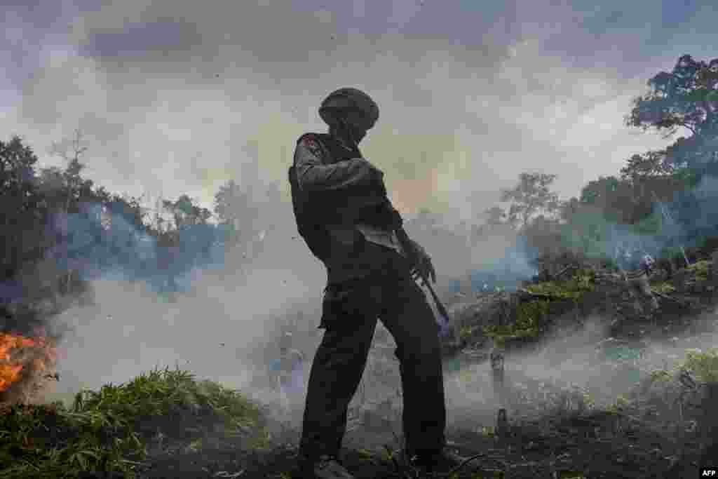 Marijuana plants are burned during a raid by the police, the military and Indonesia's National Narcotics Board. The raid destroyed some 4.5 hectares of cannabis plantations in the Lamteuba forest line, Aceh province.
