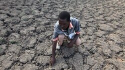 Quiz - Study: One-Third of Humans Could Face Almost 'Unlivable' Heat by 2070