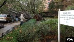 В Нижнем Манхэттене, на Грэнд-стрит, ураган повалил дерево