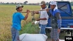 Hasil panen padi menurun drastis akibat kemarau panjang di Indonesia (foto: VOA/ R. Teja Wulan).