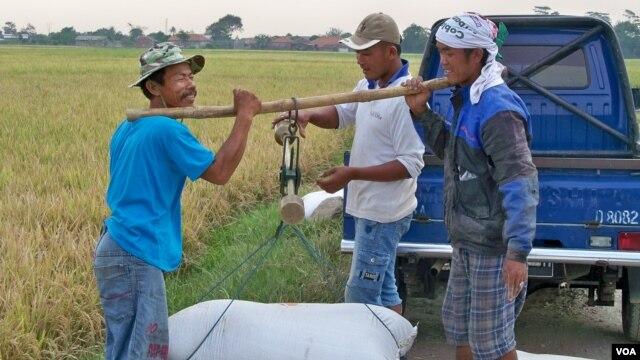 Petani beras di Jawa Barat. (VOA/R. Teja Wulan)
