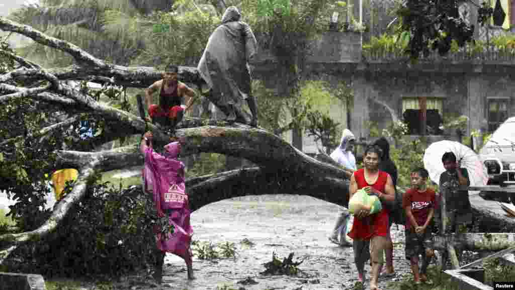 Residents saw an uprooted tree to clear the road after Typhoon Bopha hit Tagum City, Philippines, December 4, 2012.